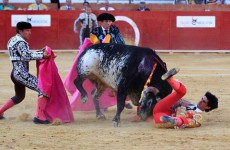 Bull, Bull fighting, Spain, Lorenzo