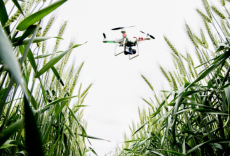 drone, agriculture, India