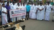 dogs culling, dogs, killing, Kerala, RSS, CPI (M)
