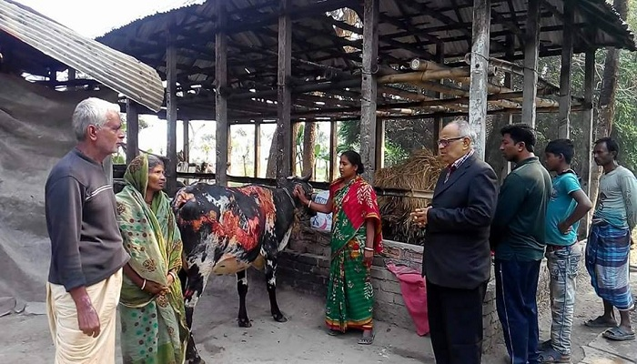 Bangladesh Minority watch, cows, Hindus, Hinduism, Land grabbing