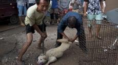 Yulin, Anti Fur Society, Dog meat, Cat killing, China, Bhagavad Gita, Nagaland, Hindus, Hinduism, India